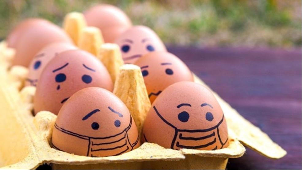 แพ้ไข่